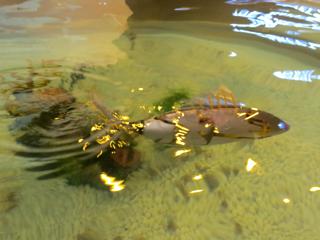 Fishrobot1